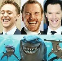 On a retrouvé les requins de Nemo