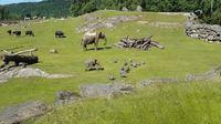 Les aventures de bébé éléphant