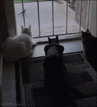 Les chats c'est des connards...