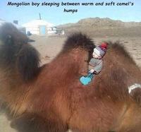Un enfant mongol bien calé