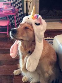 Le chien de mello