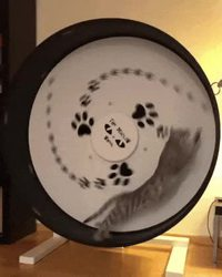 La roue de chat