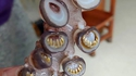Les ventouse des calamar ont des dents !!!!!!