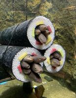 Décor d'aquarium adapté