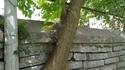 Un arbre dans un mur