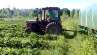 Après le tracteur ramasse-carottes, le même pour les fraises