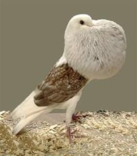 Oiseau Forever alone