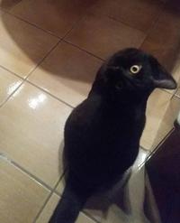 Un corbeau ou un chat ?