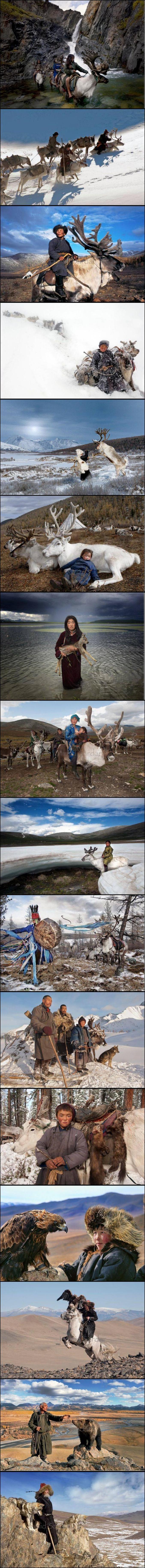 """Par le photographe Hamid Sardar-Afkhami, titulaire d'un doctorat d'Harvard en Sanskrit et études tibétaines. Vous pourrez en apprendre plus sur cette tribu dans le documentaire """"The reeinder people"""" (le peuple des rennes), du même Sardar.  Sources :  http://hamidsardarphoto.com/ http://www.theunknownbutnothidden.com/incredible-nomadic-mongolians-ride-reindeer-hunt-wolves-eagles/"""