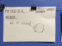 Mon chien est un ... parce que...