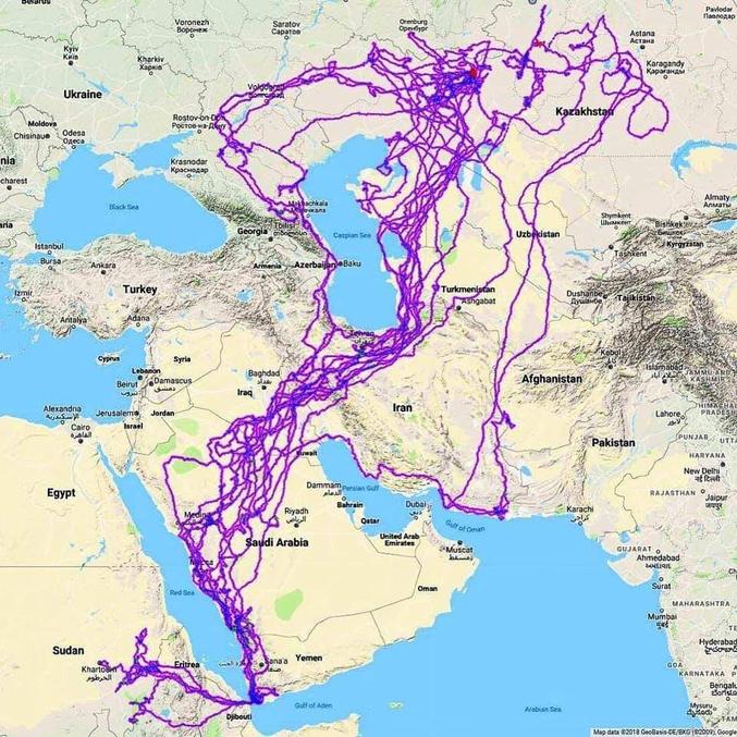 """Le parcours d'un aigle tracké par GPS sur une période de 20 ans  """"le tracker a été placé en Russie, l'aigle est mort en Arabie Saoudite"""" - Reddit"""