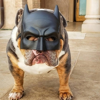 I'm the Bark Knight