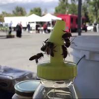 Travail d'équipe des abeilles