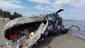 Baleine échouée