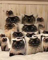 Trouvez le chat...