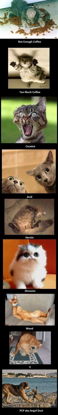 Les effets de la drogue 2