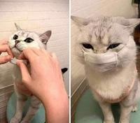 Un chat avec un masque
