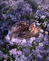 Bambi (Le Film)