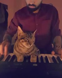 Un chat et un piano
