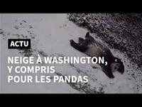 Un panda glisse sur la neige