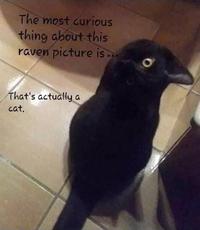 Oiseau ? ...C'est presque chat !