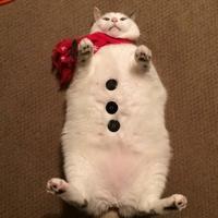 Un chat bonhomme de neige