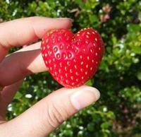 Dites-le avec une fraise