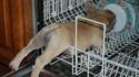 Double lave-vaisselle