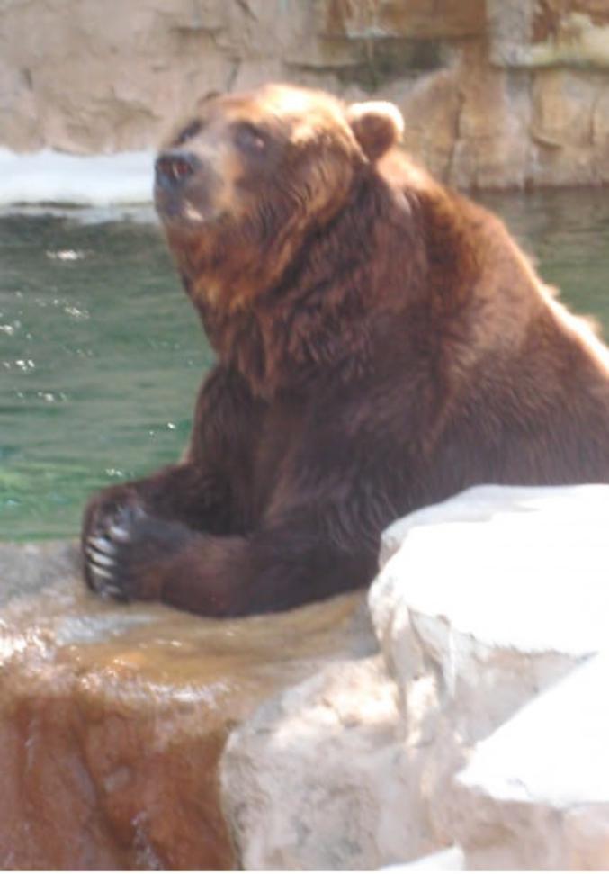 Un ours qui prie.