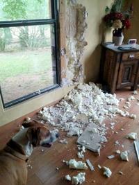 Vilain chien