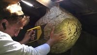 Jean-Michel Blague découpe un nid de frelon asiatique.