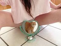 Belle chatte rousse
