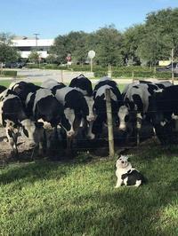 Oh la vache, comment il nous ressemble !