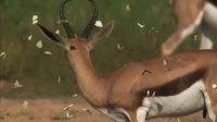 Qui veut voir des springboks bondir au ralenti ?