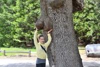 """""""Auprès de mon arbre, je vivais heureuse..."""""""