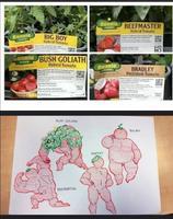 Variétés de tomates
