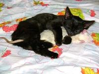 Comme chat et rat