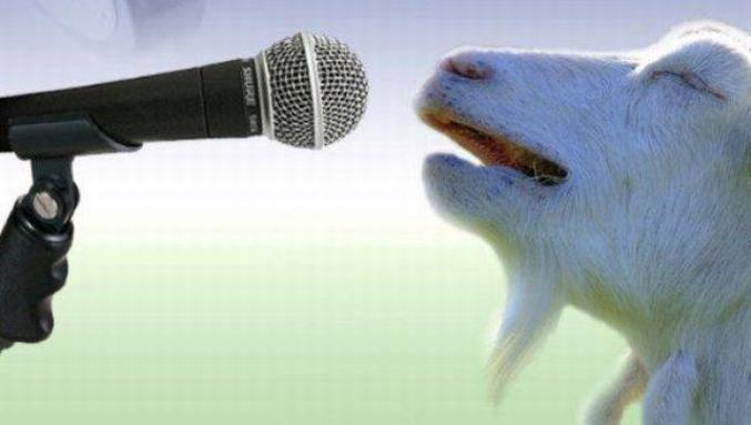 """Il reprend """"Bêle"""" de la Comédie Musicale """"Notre Dame de Paris""""...  (Message du ccc -> Comité Contre les Chèvres [on ne parle pas de ces charmants petits animaux bien-sûr])"""