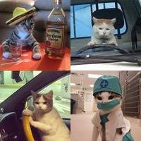 Vies de chats