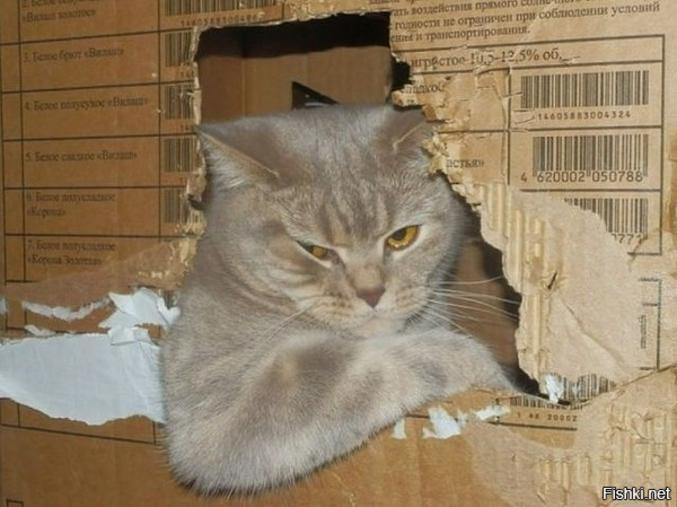 Tu montes dans ma caisse ?