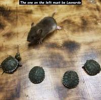 Les vraies tortues ninjas