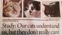 Nos chats nous comprennent, mais ça ne les intéresse pas vraiment !