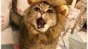 Un lion à domicile