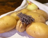 Les patates de Gustave Courbet