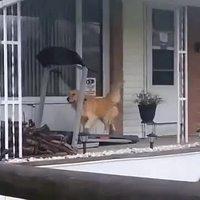 Sortir le chien