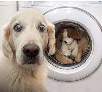 Que pourrait dire ce chien?