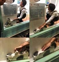 Kan t'essayes de récupérer ton chat