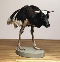 Vache-autruche