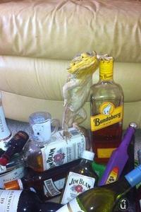 Alcoolézard