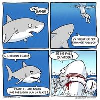 Les requins, ces incompris de la nature !